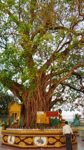 Myanmar_2015_0473_500